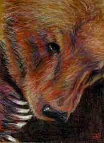 Shy Bear/Prisma