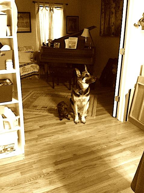 dogs studio