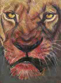 Lioness after Lunch/Prisma
