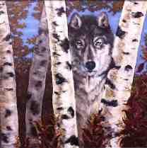 birch wolf/oil