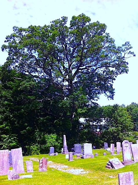 tree & stones