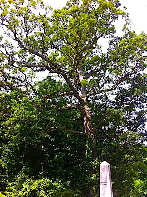 tree with monu