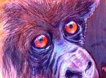 baby gorilla/Prisma