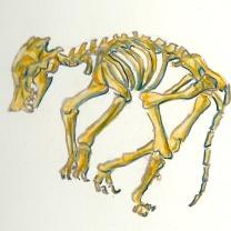 Chupacabra Bones/Prisma