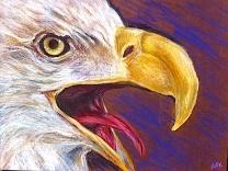 eagle/Prisma