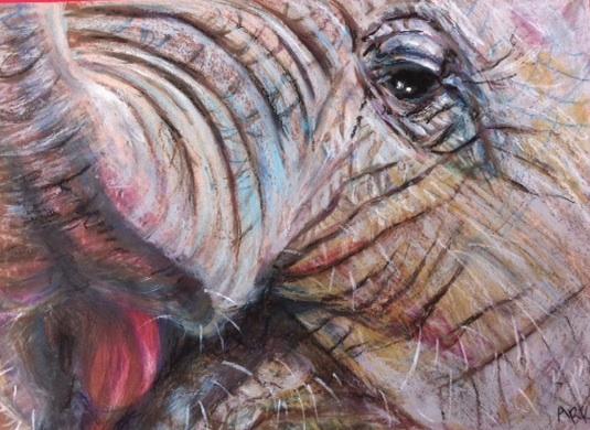 elephant eye:trunk