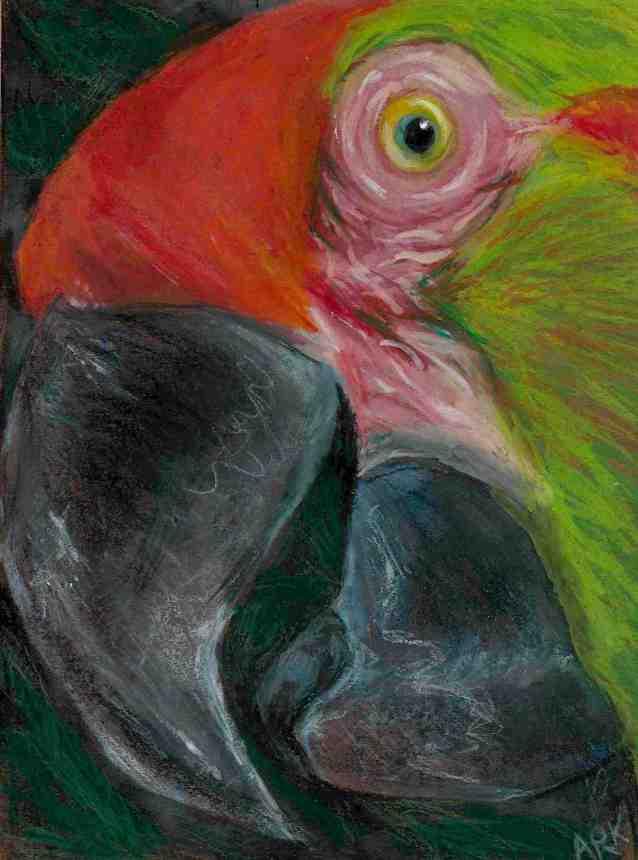 Parrot.sm