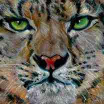 Snow leopard/Prisma