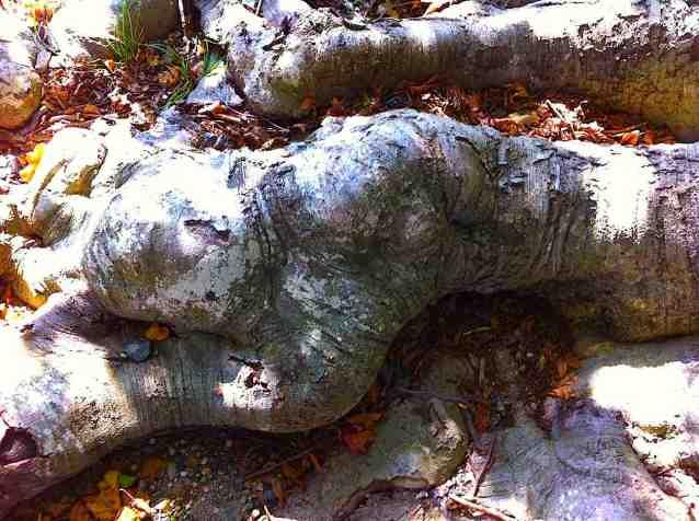 Sleeping Root