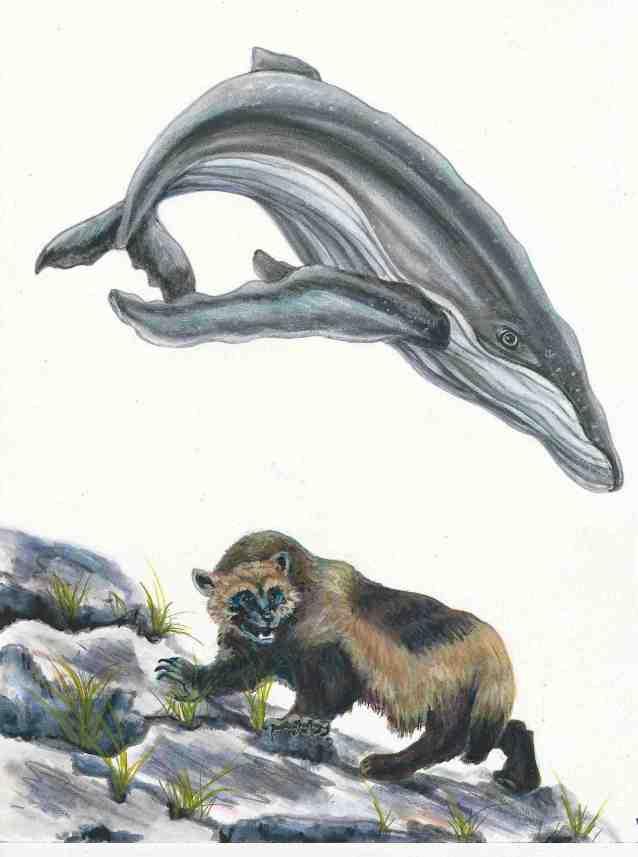 whale:wolverine