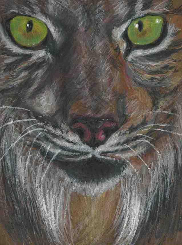 lynx eyes