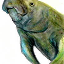 West Indian Manatee